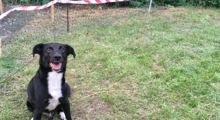 Hund freut sich im Garten